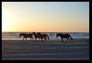 horses - North Carolina