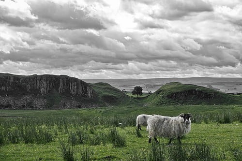 hadrians wall path photo